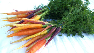 Heirloom Carrots (Bunch)