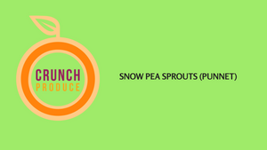 Snow Pea Sprouts (Punnet)