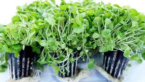 Watercress available at Crunch Produce Brisbane fruit and vege home delivery.
