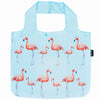 FLAMINGOS sold out