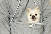 """Dog Pocket"" Hoodie Sweatshirt - For the Serious Dog Lover!"