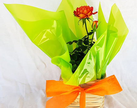 Large Gift Roses