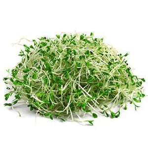 Organic Broccoli Sprouts