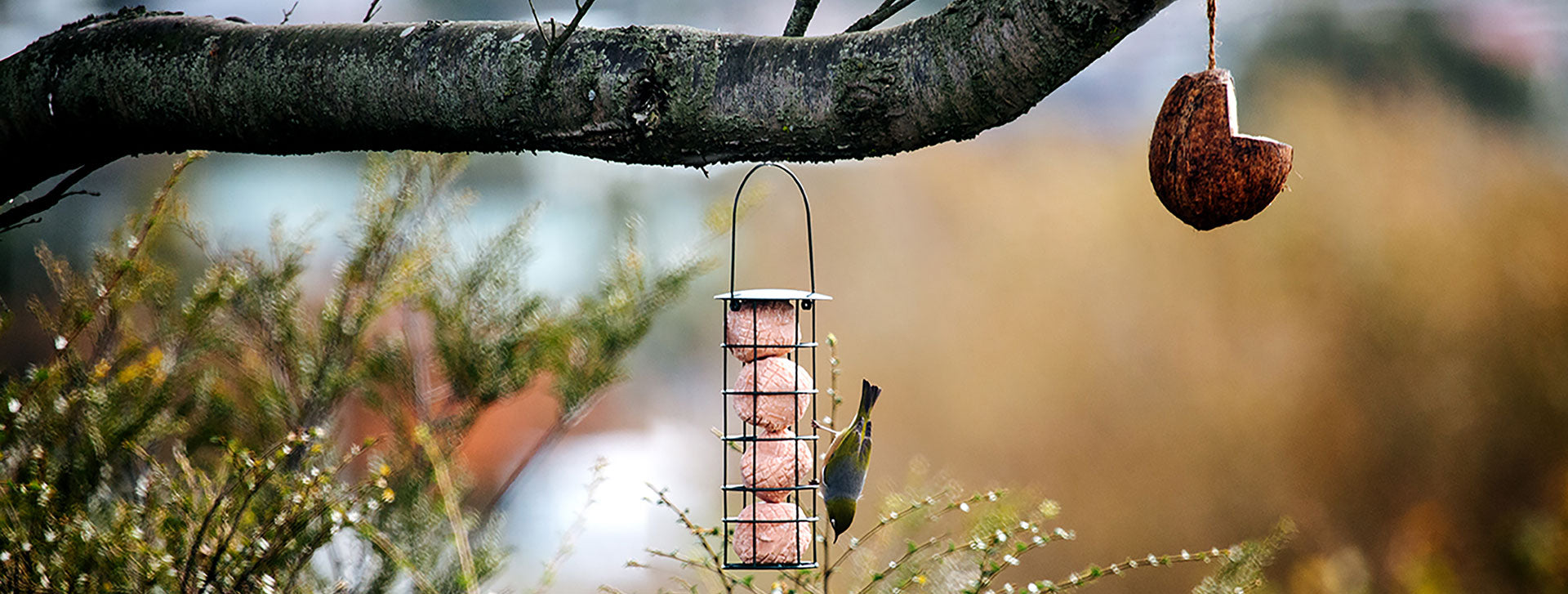 Wild Bird Energy Truffle Feeder