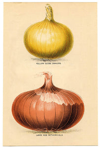 COVID, Anxiety and Onions
