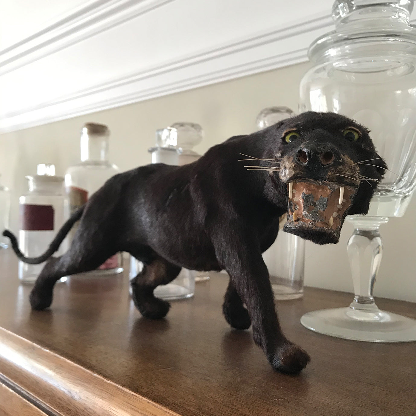Victorian Model Panther