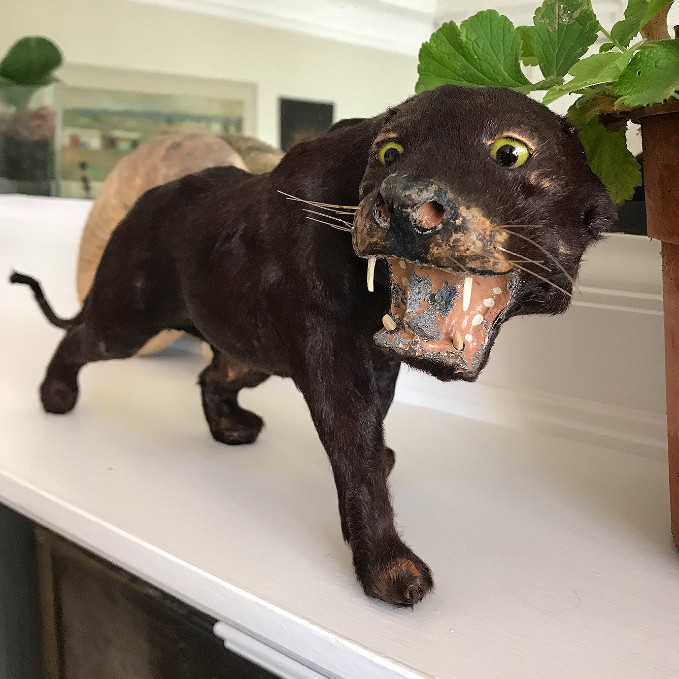 A superb, sleekly modelled Victorian Black Panther. With fierce green eyes, sharp pointy fangs and fantastic whiskers. A super fierce item! - SHOP NOW - www.intovintage.co.uk