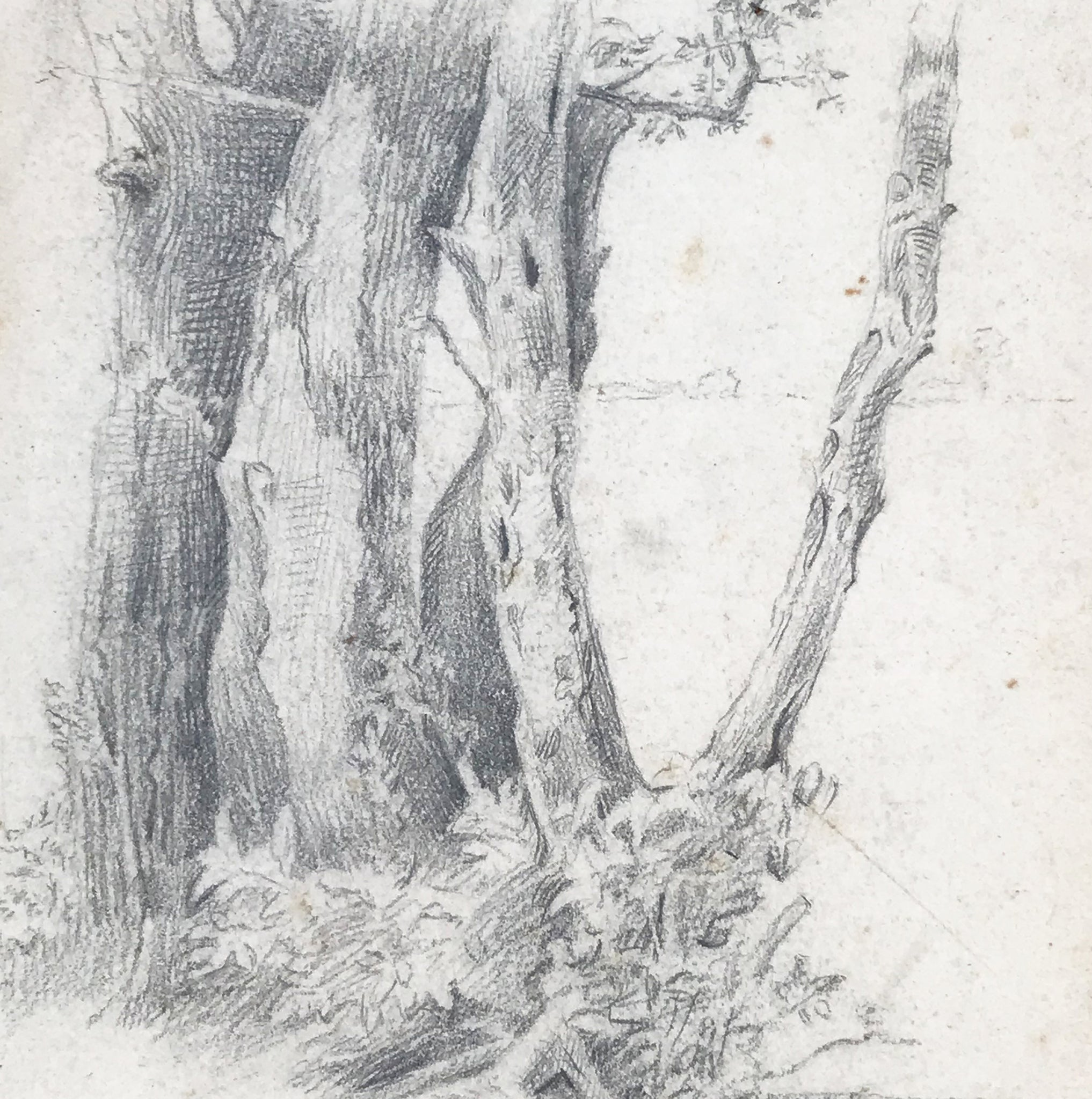 Nice pencil study of tree trunks. Signed 'Tottenham 23/5/19'. Find Art, Antique Etchings & other Antique Prints at IntoVintage.co.uk