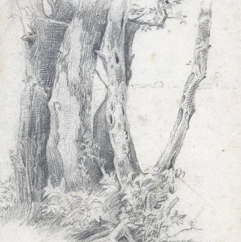 Study of Trees in pencil