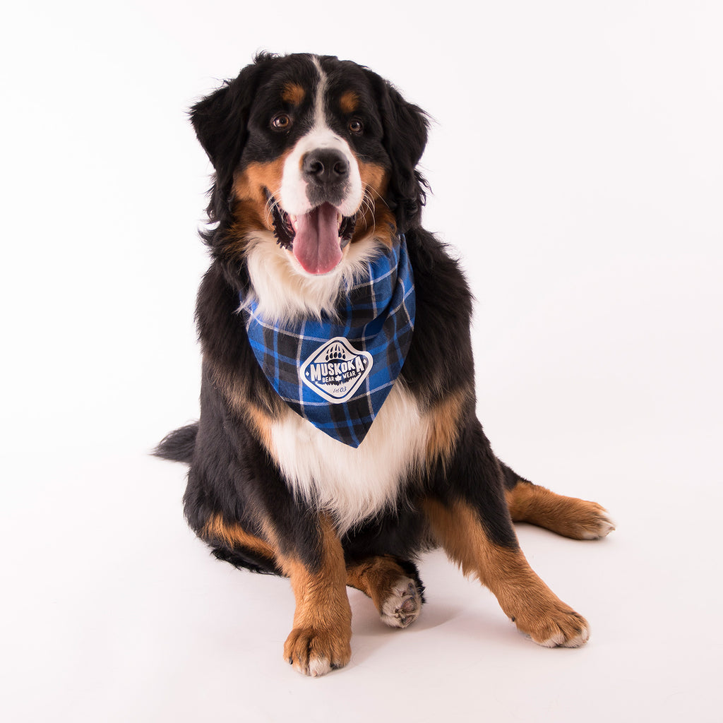 Muskoka Bear Wear – Doggie Bandana in Blue Plaid