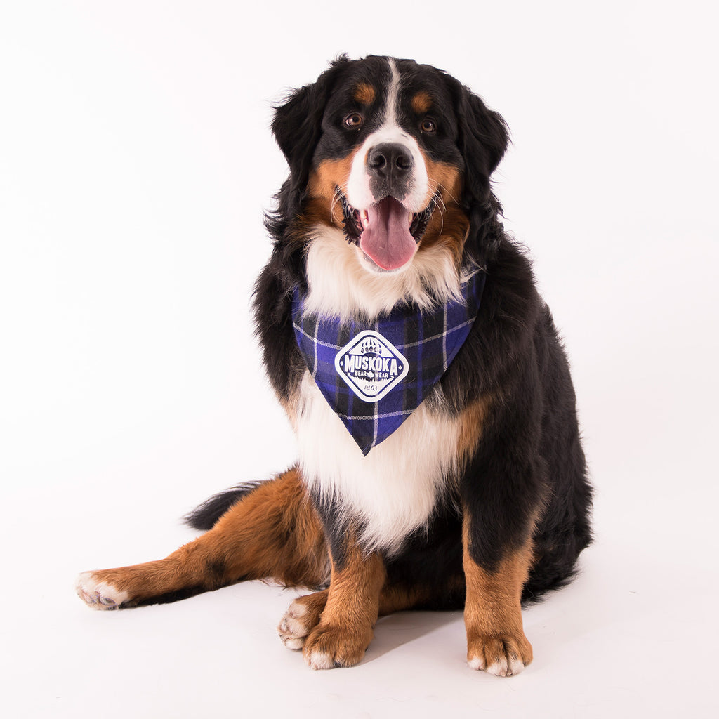 Muskoka Bear Wear – Doggie Bandana in Purple Plaid