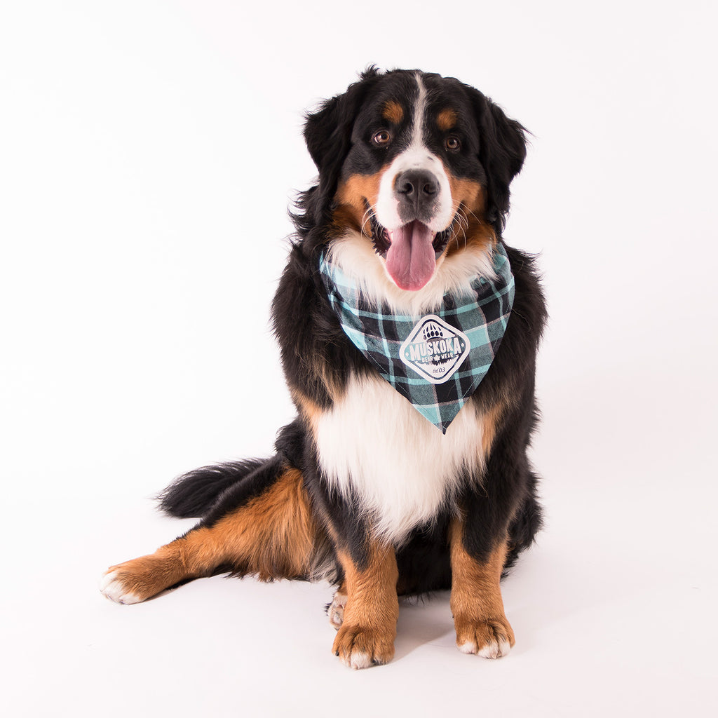 Muskoka Bear Wear – Doggie Bandana in Teal Plaid
