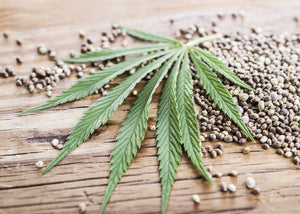 A History Of Hemp in North America