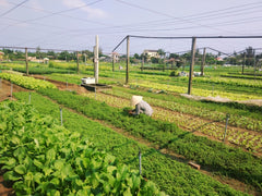 Organic farm in Hoi An, Vietnam