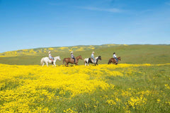 Horseback riding through the wild flower super bloom in spring