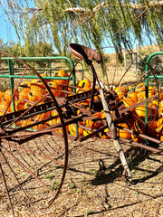Vintage farm equipment near the pumpkin display.