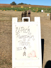 U-Pick pumpkin patch at the farm.