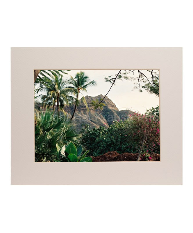 Diamond Head Foliage 5x7 Matted Photo Print