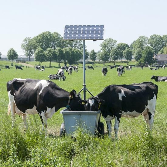 Sustainable Farming: How Solar Technology is helping Farmers provide fresh clean water in winter for their cattle