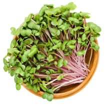 FRESH PURPLE RADISH SHOOTS