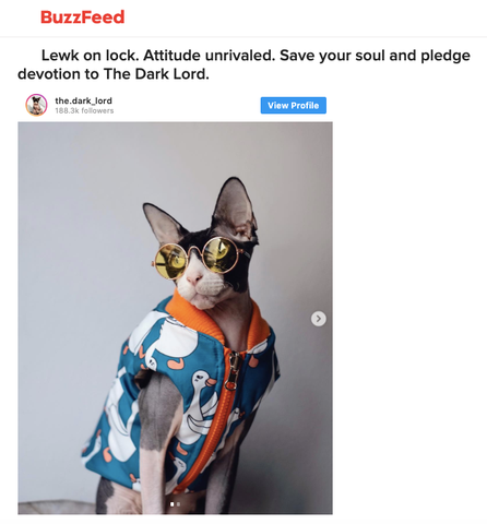 Buzzfeed The Dark Lord Cat