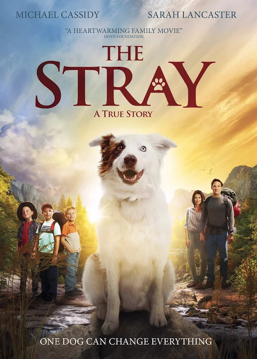 DVD-The Stray