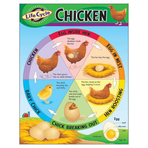 (6 Ea) Chart Life Cycle Of A Chicken