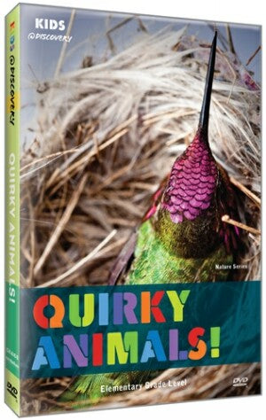 Quirky Animals!