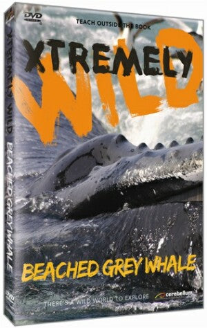 Xtremely Wild: Beached Grey Whale