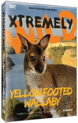 Xtremely Wild: Yellow Footed Wallaby