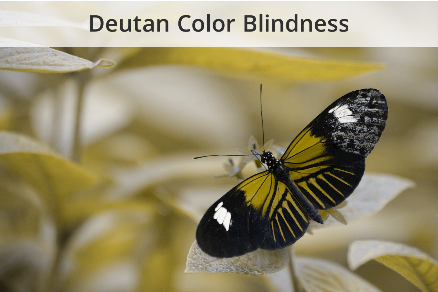 Types Of Color Blindness What Do Color Blind People See Enchroma Color Blind Glasses Enchroma