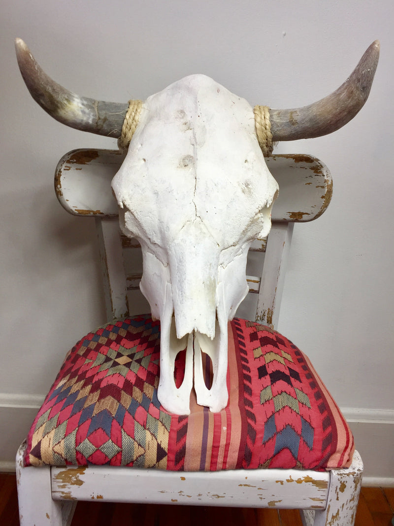 "22"" Genuine Taxidermy Skull Wall Hanging - Southwest Cow Skull"