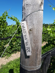 KIN Vineyard chardonnay marker in Eastern Ontario's emerging wine region.
