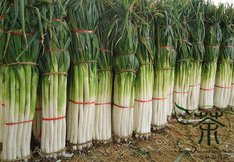 Allium Fistulosum, Welsh Onion Seed, Zhang Qiu Da Cong - Vegetable Seeds - bestplant - bestplant