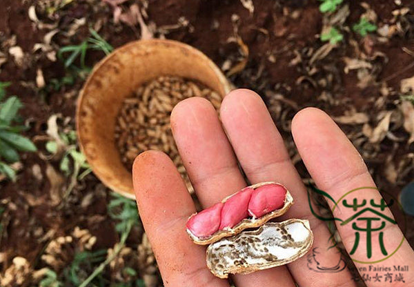 Arachis Hypogaea, Red Peanut Seed, Chinese Groundnut Hong Hua Sheng