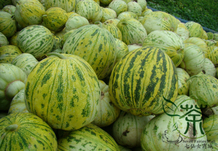 Cantaloupe Muskmelon, Cucumis Melo Seed, Lv Xiang Gua - Fruit Seeds - bestplant - bestplant