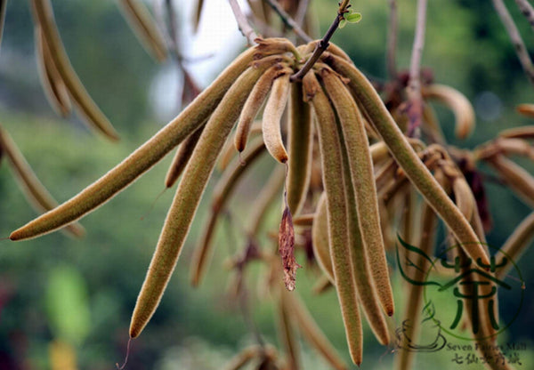 Handroanthus Impetiginosus, Pink Lapacho Seed, Zihua Fengling Mu