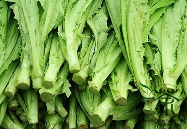 Lactuca Sativa, Common Lactuca Seed, Lettuce You Mai Cai