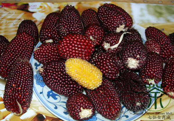 Strawberry Maize, Fruit Corn Seed, Zea Mays Caomei Yu Mi
