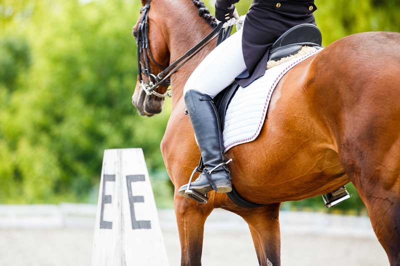 horse with dressage