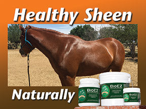 horse with a healthy sheen