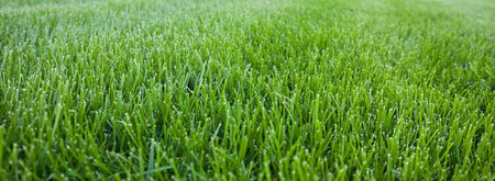 Types of Grass Edmonton