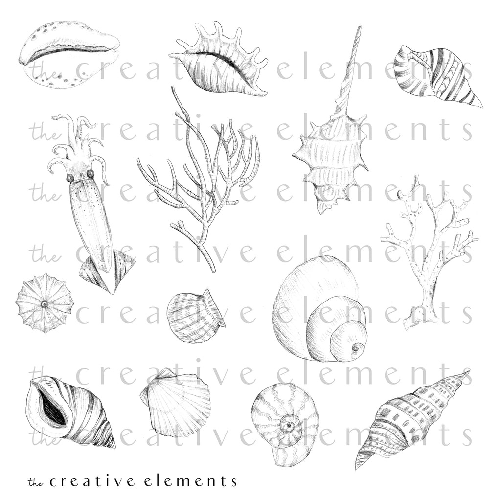 PENCIL SKETCH SHELLS