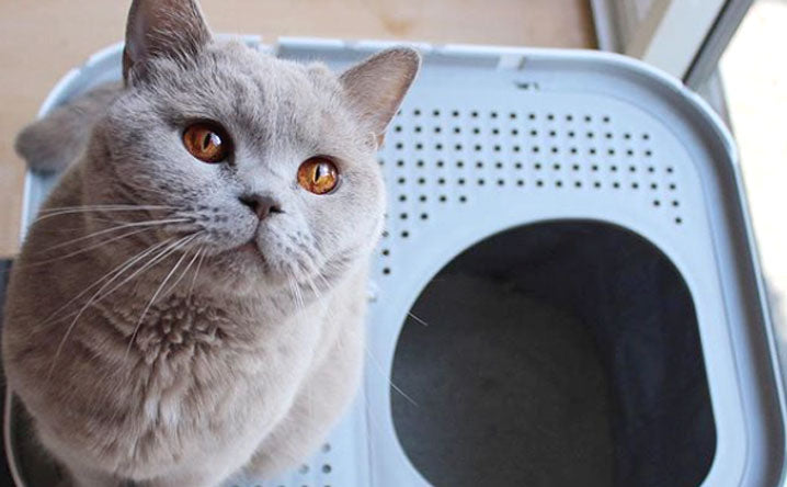 5 risks of keeping a dirty litter box.