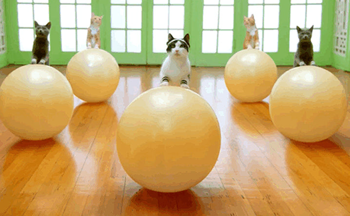 5 ways to get your cat to exercise.