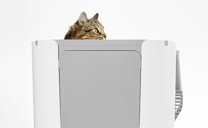 7 Benefits of a top-entry litter box.