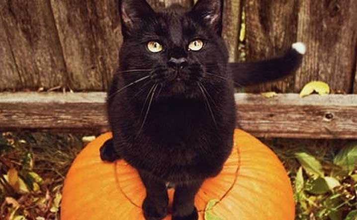 9 Tricks to Make Halloween a Healthy, Happy Treat for Your Cat