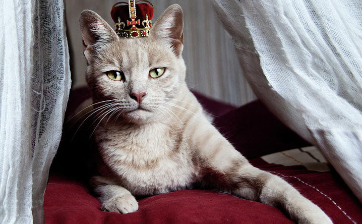 Famous Cats of History