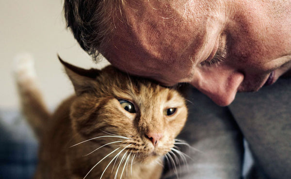9 Tips for Living with Older Cats