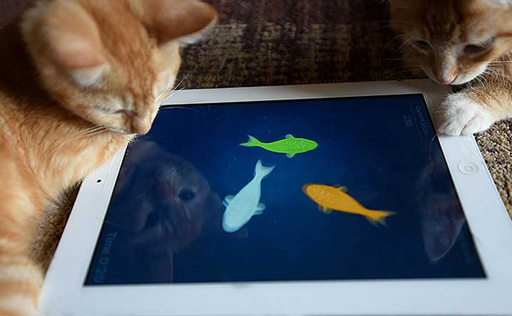 Top Apps for Cats and the People Who Love Them